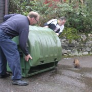 Pine marten in the bin