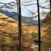 Clahaig chalets through the trees