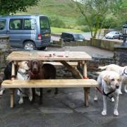 Dogs at Clachaig